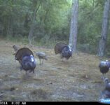 Turkey Cam
