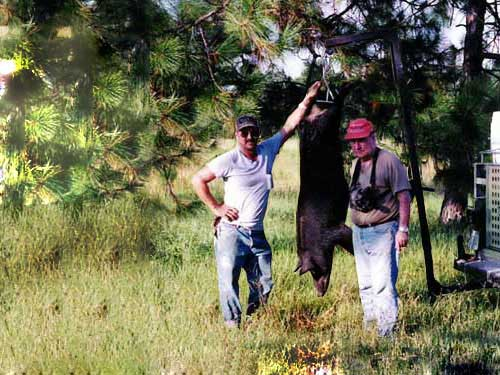 hunting-in-florida-hog-hunting-007